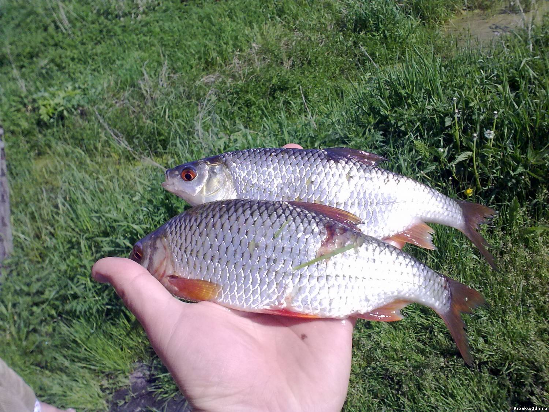 болтушка и другие прикормки для рыбалки
